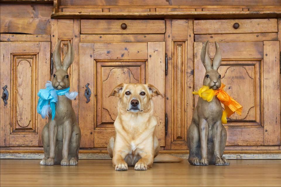 Mila & The Bunnys